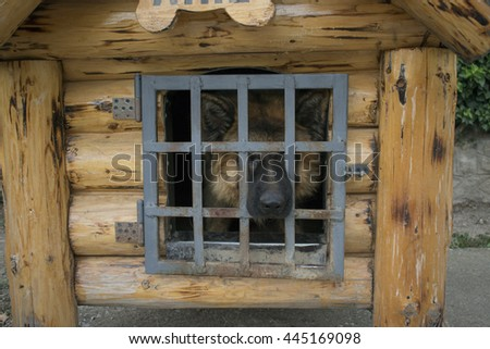 Dog in the doghouse - stock photo