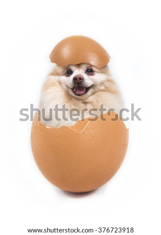 dog in the egg - stock photo