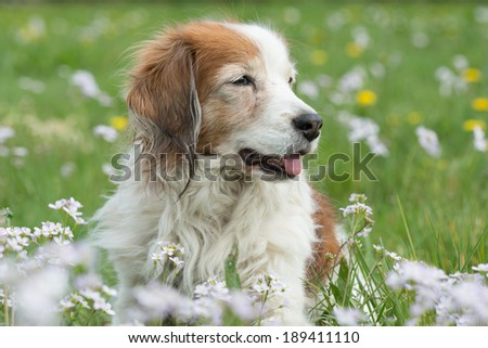 Dog in the flowers - stock photo