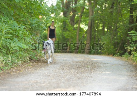 Dog in the foreground and blurred woman walking in the street between the nature - stock photo