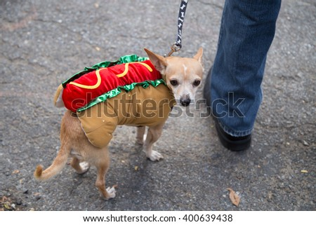 Dog in the Halloween suite - stock photo