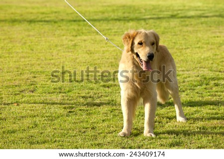 Dog in the park. - stock photo