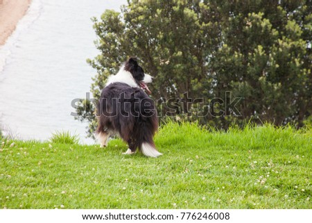 Dog in the park. Auckland, New Zealand