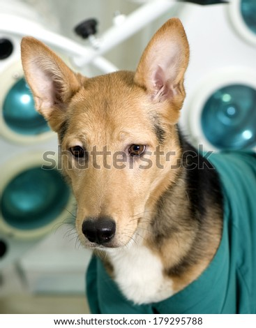 Dog in veterinary clinic