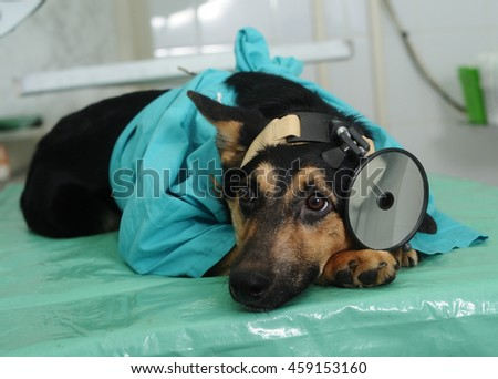 Dog in veterinary clinic - stock photo