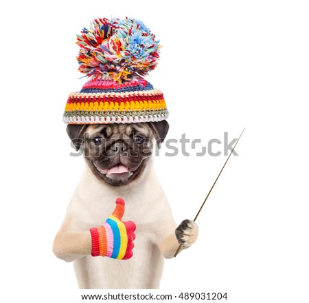 Dog in warm hat holding a pointing stick and showing thumbs up. isolated on white background.