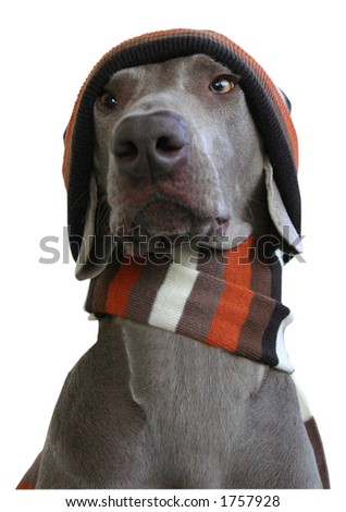 dog in winter look 1