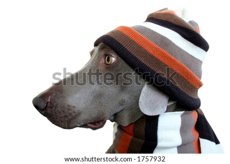 dog in winter look 4 - stock photo