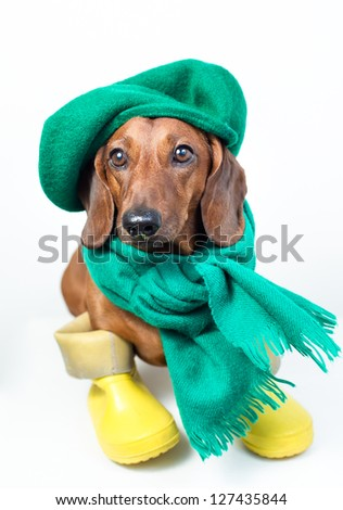Dog in yellow boots and green scarf