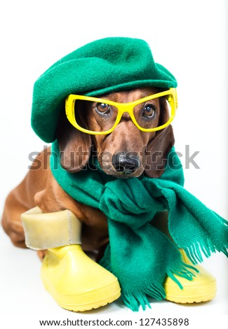 Dog in yellow boots and yellow glasses