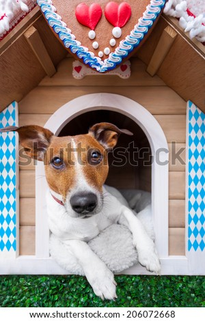 dog inside a bavarian house or beer tent - stock photo