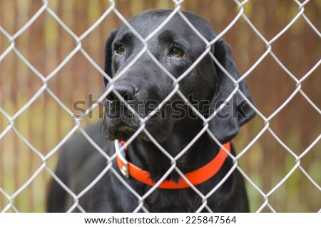 Dog inside kennel - stock photo