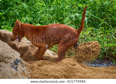 dog is digging hole in garden - stock photo