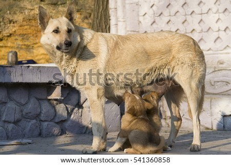 Dog is feeding puppies.