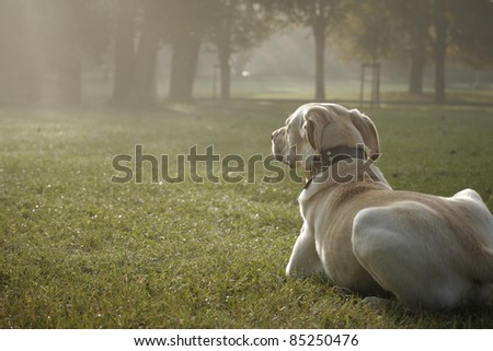 Dog is lying in park - autumn