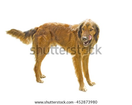 Dog isolated in white background