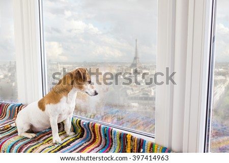 Dog Jack Russell terrier is looking at a huge window. Great view to the Paris skyline. In anticipation of walking in the French city. Romantic Weekend in Paris. Dog friendly hotels and apartments