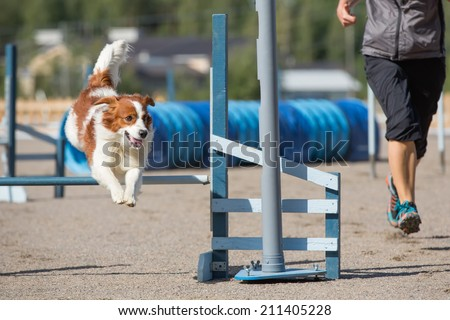 Dog jumps over an agility hurdle in agility competition - stock photo