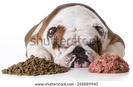 dog laying between pile of kibble and raw dog food on white background - bulldog - stock photo