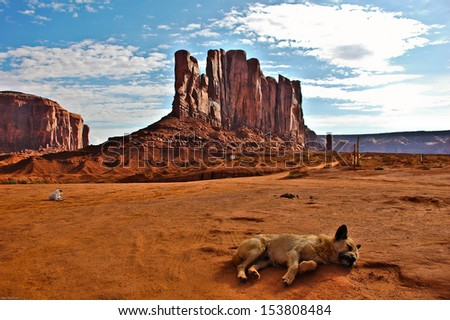 dog laying in the sun in Monument valley - stock photo