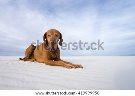 dog laying on white sands in new mexico - stock photo