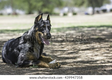Dog laying outside chewing on a bone