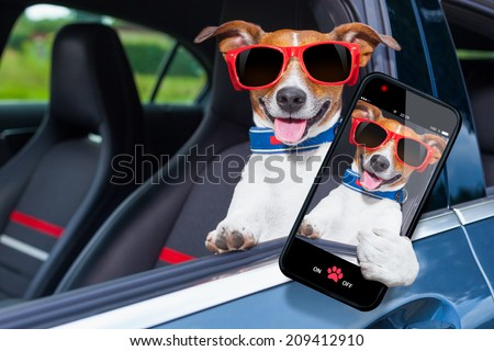 dog leaning out the car window making a selfie for the family - stock photo
