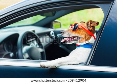dog leaning out the car window with funny sunglasses - stock photo