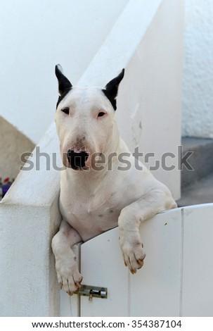Dog leaning over fence gate - stock photo