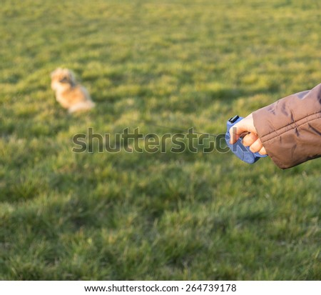 Dog leash in woman's hand - stock photo