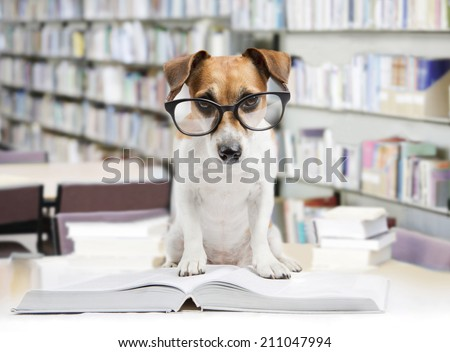Dog librarian keeps order. Read big book. Back to school - stock photo