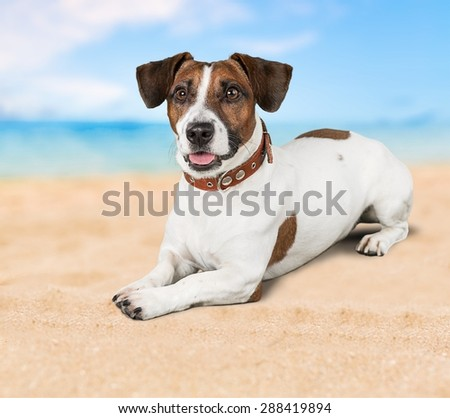 Dog, listen, talk. - stock photo