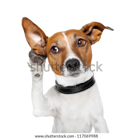 dog listening with big ear - stock photo