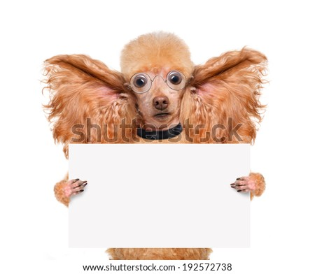 dog listening with big ears - stock photo