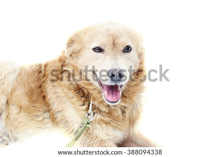 dog looking
