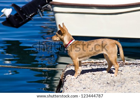 Dog looking at the sea in the harbor