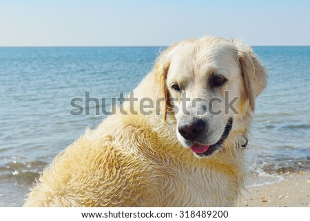dog  looking  happy around on the beach