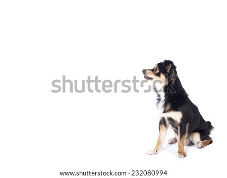 Dog looking left side - stock photo