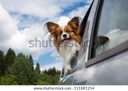 Dog looking through the open car window - stock photo