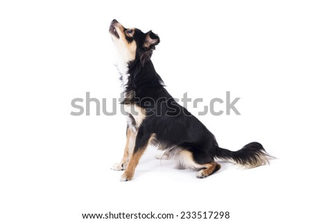 Dog looking up - stock photo