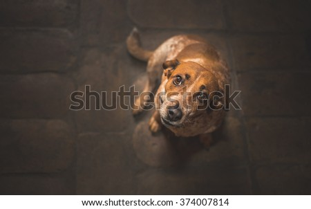 Dog looking up to his owner - stock photo