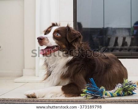 Dog lying by fireplace, white walls - stock photo
