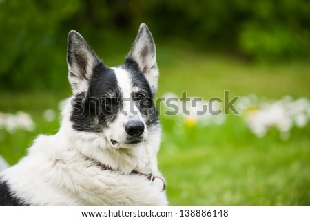 Dog lying in a garden - stock photo
