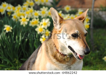 dog lying in a meadow of flowers and fresh grass