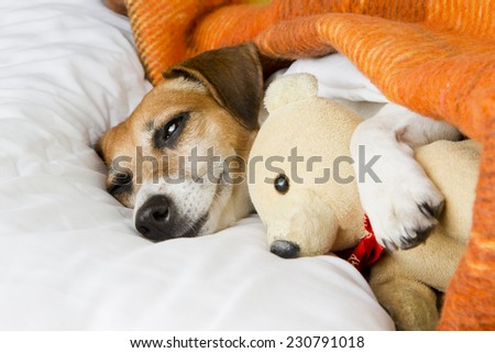 Dog lying in bed gently hugs a teddy bear - stock photo