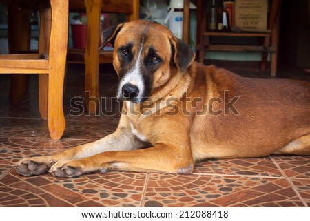 Dog lying in the house - stock photo