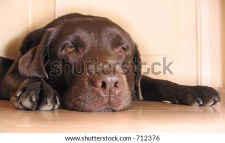 Dog  lying on floor
