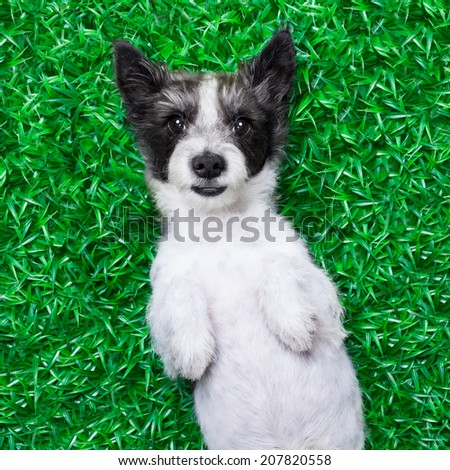 dog lying on grass at the park looking very  cute and pretty - stock photo