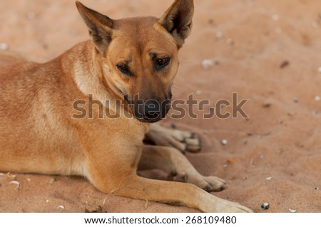 Dog lying on sand background