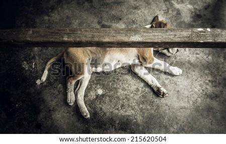 Dog lying on stone floor under a table on Neil Island, India. - stock photo